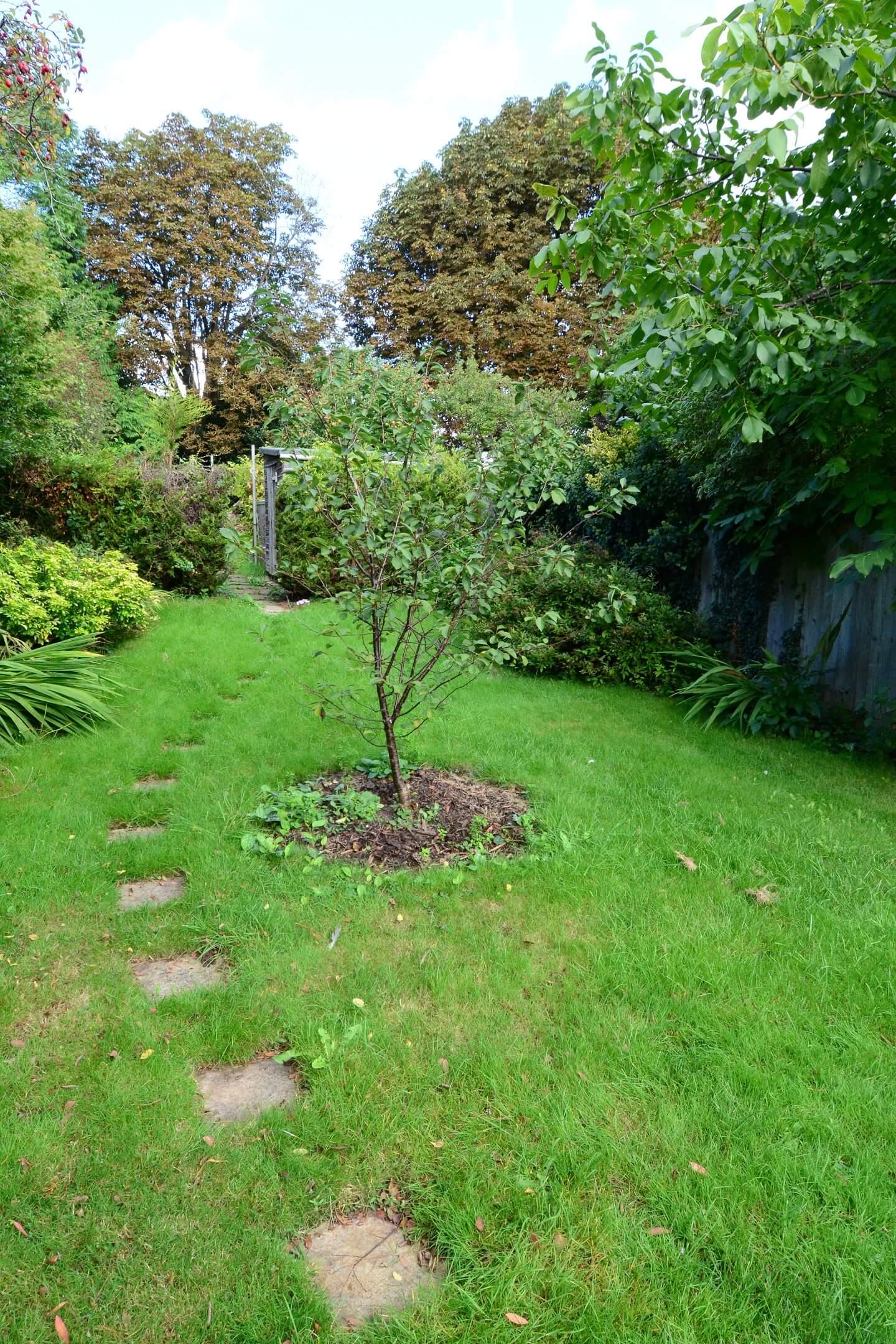 Victoria Road Garden2